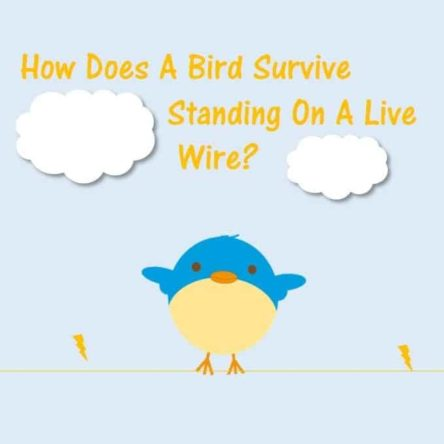 Bird Survive Standing Live Wire
