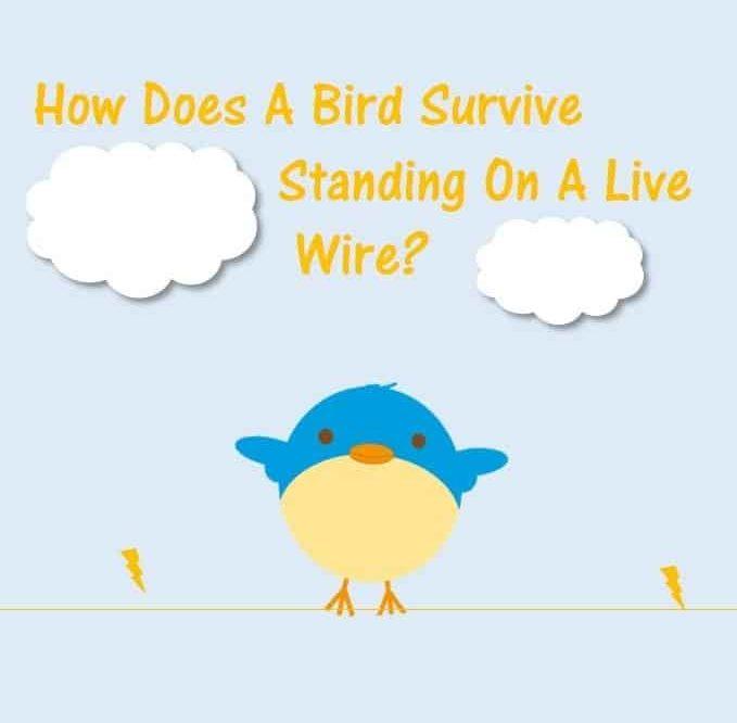 Bird Survive Standing Live Wire